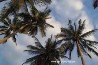 Suprise, kamar mandinya terbuka, tengok keatas langsung pohon kelapa