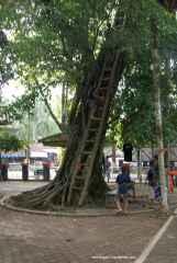 Ada rumah pohon