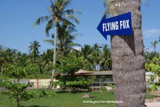 Papan flying fox