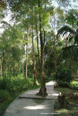 Jalan menuju danau Taman Bougenville Singkawang
