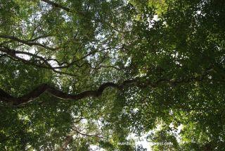 Dipenuhi pepohonan