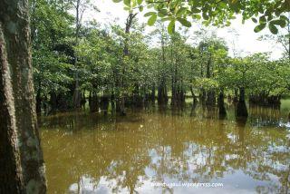 Danau Taman Bougenville Singkawang