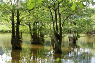 Danaunya ada pohon
