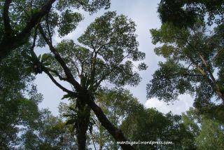 Pohon teduh dan lindung
