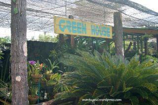 Green house isinya anggrek semua