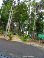 Hutan sejuk