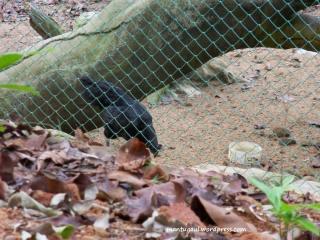 Kebun Binatang Sinka