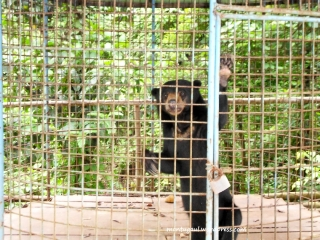 Kebun Binatang Sinka Zoo