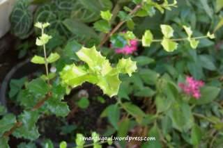 Makro bunga