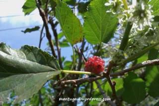 Makro buah