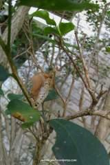 Sisa kepompong kupu-kupu