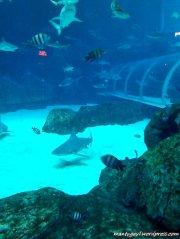 Foto akuarium