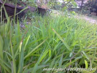 Foto rumput