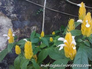 Foto bunga