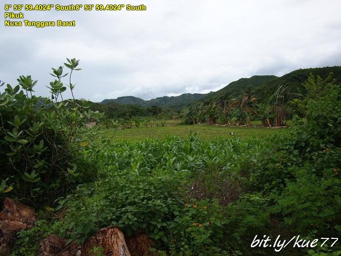 Daerah Selong Belanak
