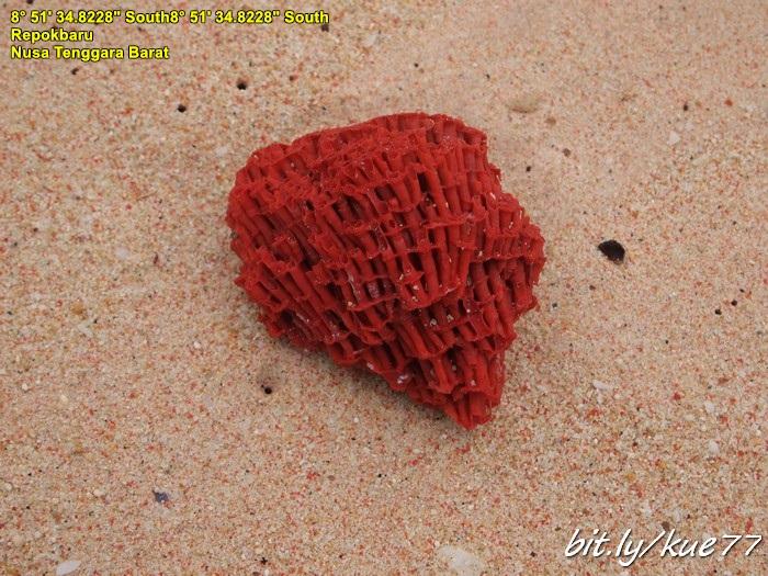Karang inilah penyebab merahnya pantai pink