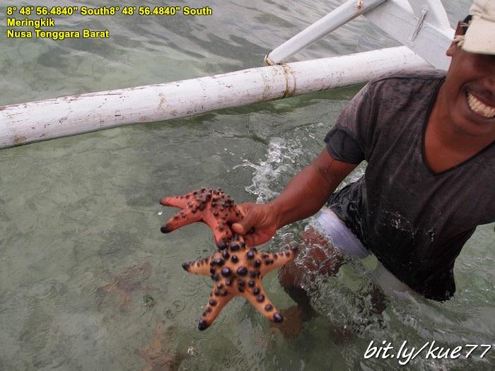Ketemu bintang laut di pulau meringkik