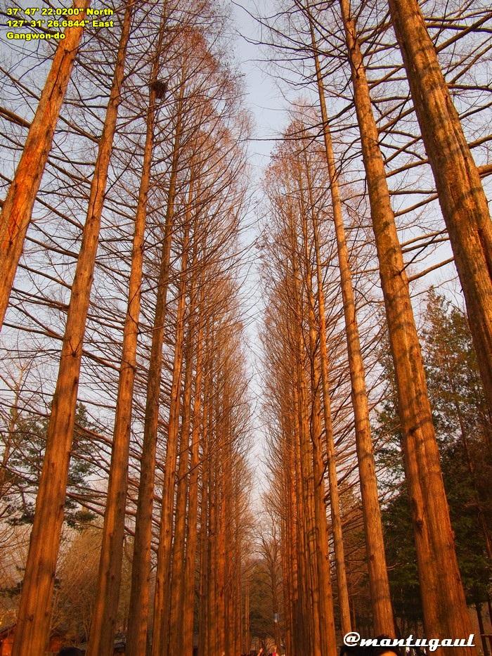 Nami Island, tempat shooting K-drama Winter Sonata