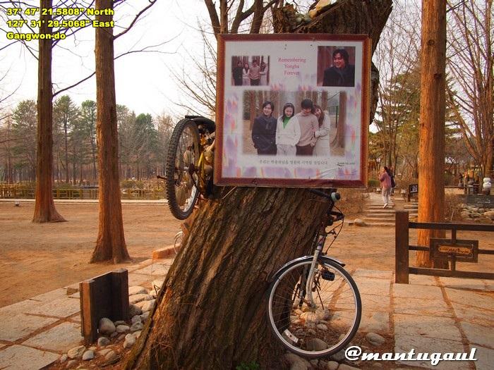 Nami Island, pemeran Winter Sonata Jung Ha sudah meninggal