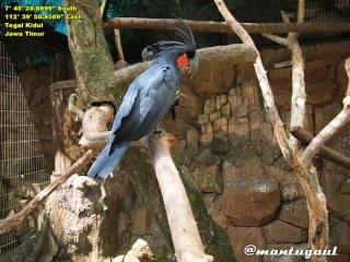 Kawasan burung
