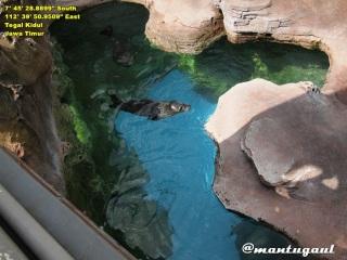 Anjing laut