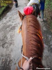 Naik kuda